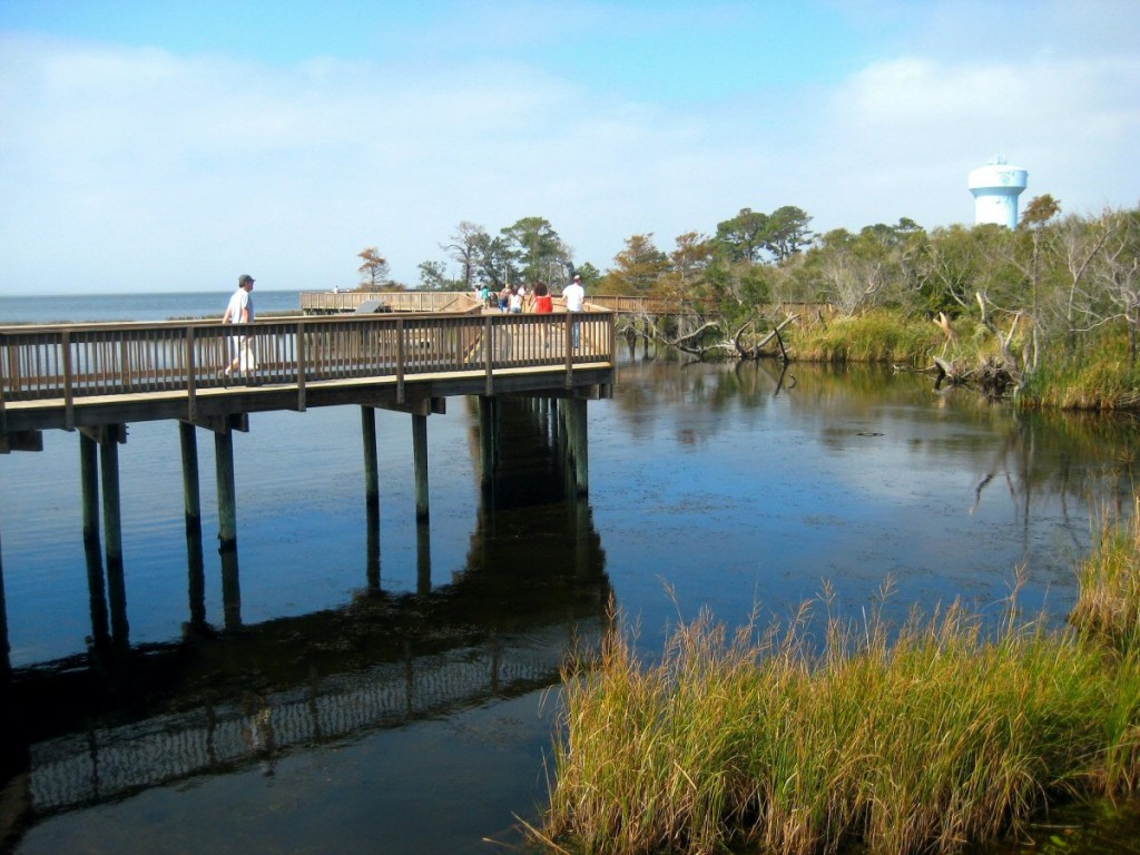 Duck Boardwalk on the Sound